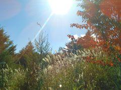 秋のバラギ(その1)