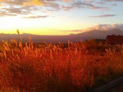 秋のバラギの朝